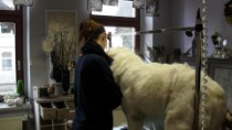 Hundesalon Apolda
